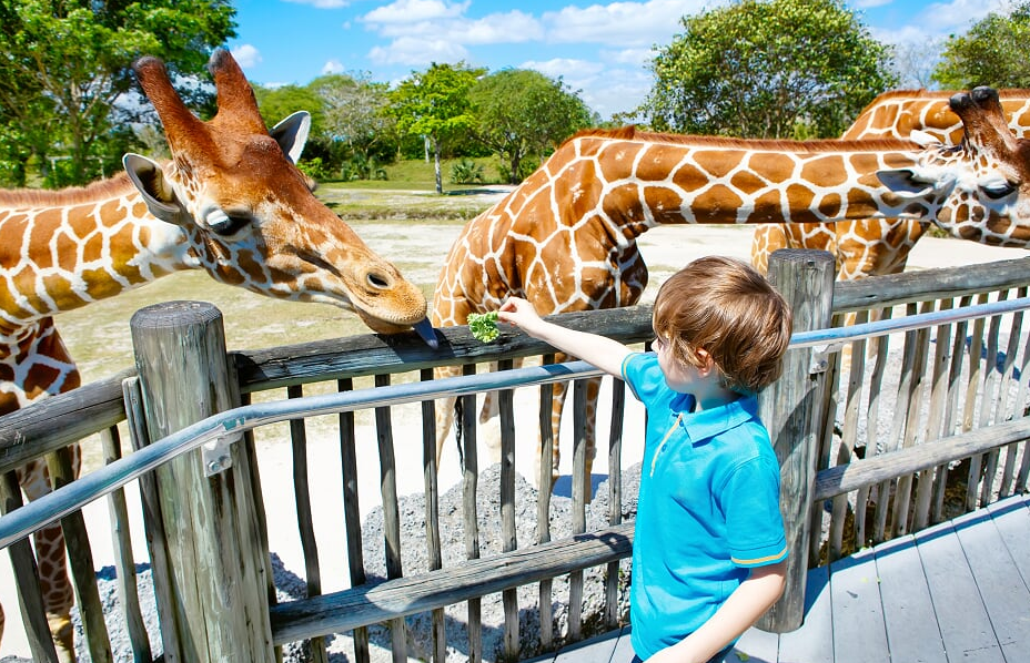 Exciting events at Fota Wildlife Park